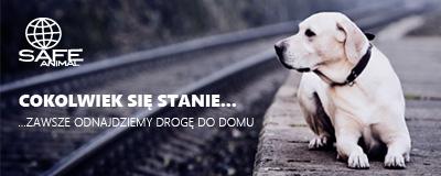 Safe-Animal | Międzynarodowa Baza Danych