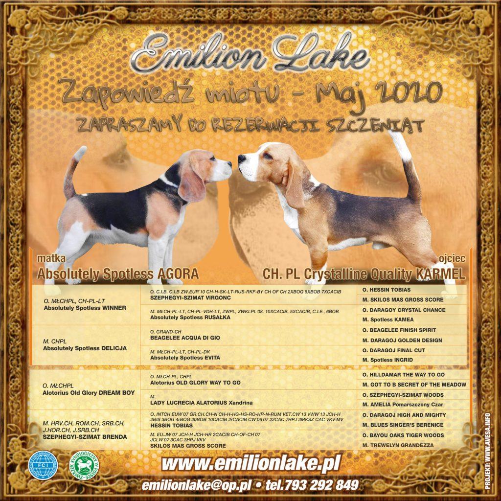 Emilion Lake - hodowla Beagle - miot maj 2020